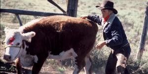 COWGIRLS-Melody_Cow-1800x900-web